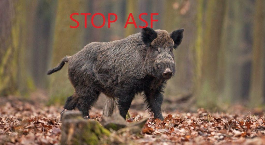 """Zaproszenie na szkolenie online """"Stop ASF"""""""